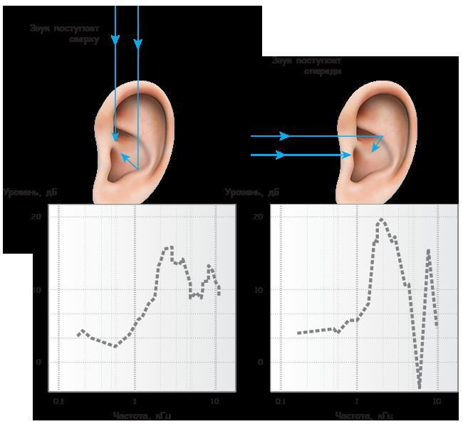 Частотно-амплитудные графики передаточных функций человеческого уха для звуков, которые поступают с разных направлений.