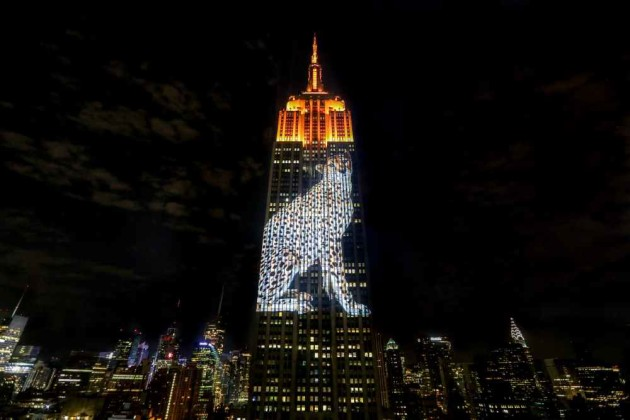 Snow-leopard-on-Empire-State-Bldg-lr-e1440630911486